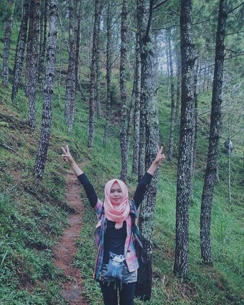 hutan-pinus-gunung-andong