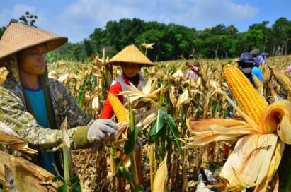 forum dan komunitas pertanian indonesia - agroteknologi.web.id