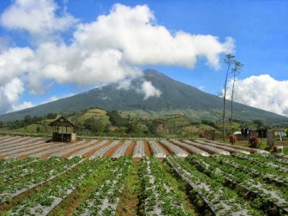 fakta dan misteri gunung slamet ketinggian gunung slamet