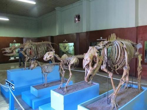 Tempat Wisata di Bogor Yang Murah Meriah Museum Zoologi